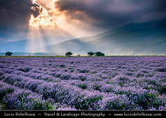 Bulgaria - Lavender fields in full bloom at Dramatic Sunset (© Lucie Debelkova / www.luciedebelkova.com) Tags: lavender lavenderfields rosevalley bulgaria bulgarian българия bălgaria republicofbulgaria републикабългария country europe southeasterneurope easterneurope balkans landscape nature natuur natureza paysage paisaje paisagem paesaggio landschaft scenery scenic overlook outlook world exploration trip vacation holiday place destination location journey tour touring tourism tourist travel traveling visit visiting wonderful fantastic awesome stunning beautiful breathtaking incredible lovely nice sight sightseeing wwwluciedebelkovacom luciedebelkova