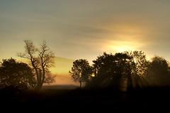 Sun Rays in Morning Fog (Gerald Lang) Tags: bäume trees autumn herbst nebel fog morning sunrays markgräflerland lanfschaft landscape sunrise sonnenaufgang oktober october