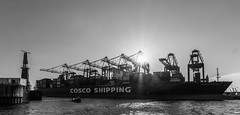 Cosco Shipping Aries SW (plattendrehermichael) Tags: ship hamburg habour port cosco shipping aries containerterminal containership elbe