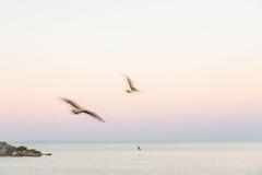 Dream Flight (NathalieSt) Tags: europe france hérault lagrandemotte languedocroussillon occitanie fuji fujifilm leverdesoleil nature sunrise xt20 birds bird oiseau oiseaux seaside mer bord de sea