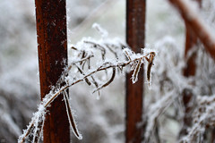 65103609 (aniaerm) Tags: snow ice frost