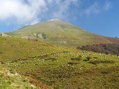 Collado de Orión (Asun Idoate) Tags: despejado nube rebaño ovejalatxa nafarroa orbaizeta irati roca