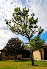 Croaked Pine... (lillypotpie) Tags: pinetree pinecones croaked branches house pumpkins sky fall