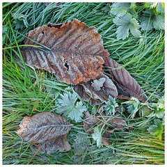 Morning frost (S.R.Murphy) Tags: october2018 nature landscape frost cold winter leaf leaves grass fujifilmx100t lightroomcc stuartmurphy