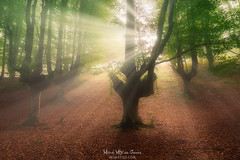 Otzarreta (Mimadeo) Tags: forest sun ray beam sunrays sunbeams mist fog morning sunlight sunny light landscape misty sunshine shine tree outdoor beams beautiful foggy nature fantasy dreamy magic otzarreta gorbea basquecountry paisvasco euskadi