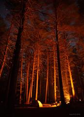 Camping (-AX-) Tags: arbre camping ny newyork tente unitedstatesofamericausa