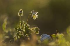 _IGP8747 (andrzejreschke) Tags: insects reptiles plants grass nature butterfly lizard moss flowers beauty beautyofnature