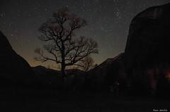 An evening in fall (peter-goettlich) Tags: fall night stars maple tree mapletree autum herbst baum ahorn ahornbaum nacht sterne karwendel eng ahornboden österreich tirol austria hinterriss bege tal mountains valley