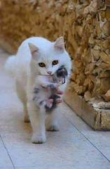 At www.Bargainbrute.com we care about you.  As a valued customer we would like to share some amazing, and inspirational pictures to help you through your day.  Our partner employees would love it if you would stop in to our huge online shopping mall and e (douglas2121) Tags: love cbdnews trump shop hiring buy motivation texas kittens cbdoil sales life security cbdlife chicago shopping news newyork business cbd cannabis cbdliving home quality amazon blockchain deals fashion