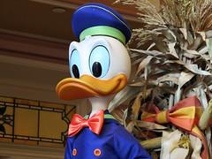 Halloween Donald Duck (meeko_) Tags: donald duck donaldduck halloween fall autumn disneyhalloween display emporium shop mainstreetusa magic kingdom magickingdom themepark walt disney world waltdisneyworld florida