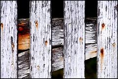 Saint-Corneille (Sarthe) (gondardphilippe) Tags: saintcorneille sarthe maine paysdelaloire portail blanc white graphique vieux old campagne couleurs colors door extérieur outdoor monochrome ombre porte quiet rural texture symétrie zen