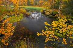 DSC0399L (Tanel Kindsigo) Tags: fin finland lapland water autumn cloudy lake leaves outdoor reflection river sky trees yellow äkäsmylly