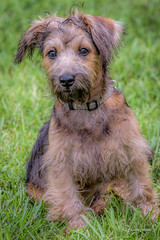 _DSC3542 (Chester Johnson) Tags: eddie fall pet puppy