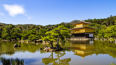 Kinkakuji Temple (Synghan) Tags: kinkakuji temple japan kyoto kinkakujitemple mirroring reflection golden deergoldentemple japanese clear photography horizontal outdoor colourimage fragility freshness nopeople foregroundfocus adjustment interesting awe wonder travel destination attraction landmark local trip tourism hotspot day daylight tranquility peace gorgeous contemplation trees pond lake tree canon eos80d 80d sigma 1770mm f284 dc macro lens 킨카쿠지 금각사 일본 교토