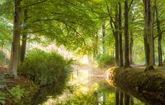 Ray of light (Jenne Barneveld) Tags: tree autumn wood reflection waterreflection lightness magical enchanted leaves morningwalk trees stilness landscape nature netherlands