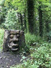 Glenarm Forest Face (marepeck@rocketmail.com) Tags: northernireland glenarm forest antrim irish