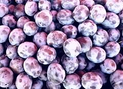 Prunus domestica (~J♡onbicykle ☞) Tags: śliwkiwęgierki commonplum freshfruit
