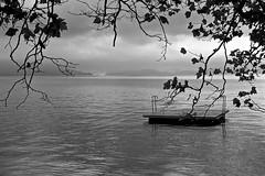 Summer is over (martinus.structor) Tags: vierwaldstaettersee lakeoflucerne schweiz switzerland bnw schwarzweiss blackandwhite monochrome water clouds branches leaves