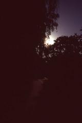 Outbacklight (Magnus Bergström) Tags: fujivelvia100f fuji fujichromevelvia100frvp slide slidefilm 35mm canonae1 canon sweden sverige värmland karlstad solberg trees road shadow sun sunshine sunset backlight