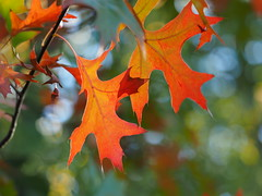 Herbst! (1elf12) Tags: herbst autumn laub foliage südsee braunschweig deutschland germany bokeh colorful bunt 2dwf leaves leafs