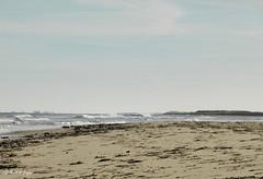 Are those trees on the horizon (mark.griffin52) Tags: england norfolk holme seascape landscape sun sand seaside beach sea