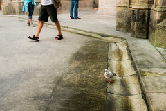 Lone Pigeon (Poul_Werner) Tags: batalha portugal santamariadavitória vitusrejser ferie rejse travel leiriadistrict pt