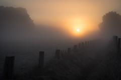 Foggy morning in the fields (Pascal Riemann) Tags: ruhrgebiet morgenstimmung nebel stimmung waltrop pflanze baum zaun deutschland gegenlicht natur germany nature backlight fence frontlighting mood morningmood plant