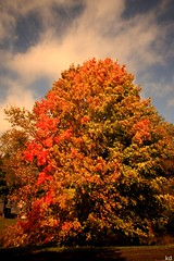 Fall Spendour (Kens images) Tags: nature fall leaves trees colours autumn palette gifts special peace seasons canon wide 1018 kanata ontario
