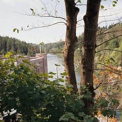 Trees & River 2 (hjnship) Tags: rolleicordv xenar75mm portra400 trollhättan göraälv river powerplant olidan 120 6x6 mediumformat analog tlr
