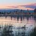 mono lake sunset bird