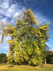The Heath's Boogeyman (marc.barrot) Tags: tree park uk nw3 london heath hampstead
