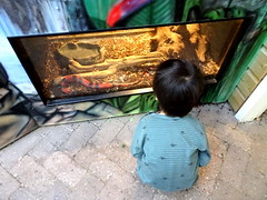 born_072 (OurTravelPics.com) Tags: born max with snake kriebelhuis t doezendpuëtje building kasteelpark zoo