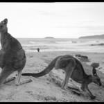 Pebbly Beach, NSW. thumbnail