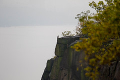 7K8A7953 (rpealit) Tags: scenery wildlife nature state line lookout peregrine falcon bird