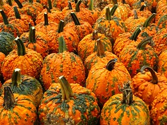 Wart Pumpkins (e r j k . a m e r j k a) Tags: pennsylvania imperial pumpkins halloween harvest fall autumn lincolnhighway us30 erjk explore