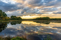 Pinelands Sunset (fotofugue) Tags: landscape clouds hiking nj pond lilypad reflecting pinebarrens pinelands water sunset franklinparkerpreserve 24105mm a7m3 sony southjersey