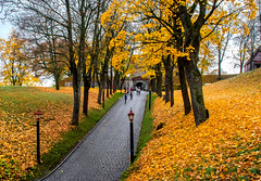 Fortress Entrance (bjorbrei) Tags: fortress entrance gate gateway road pathway tree trees leaves trunks autumn fall akershus oslo norway