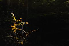 winterriveroct18-285-9 (carrieellengregory) Tags: 2018 autumn carriegregoryphotography fall october pei winterriver