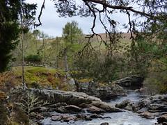 Cassley Falls 1 (Buchan11) Tags: scotland trees river rocks waterfall cassleyfalls highlands