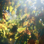 Autumn Colours thumbnail