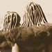 Himba Hairstyle