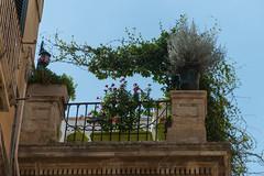 Lecce - centro storico - 14 (MoJo0103) Tags: italia italy italien puglia apulien lecce leccecentrostorico