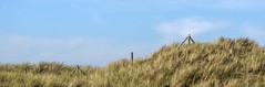 Untitled (Wouter de Bruijn) Tags: fujifilm xt2 fujinonxf90mmf2rlmwr fence dunes grass sky blue clouds nature outdoor landscape minimalist minimalism minimal calm westhove mantelingen oostkapelle veere walcheren zeeland nederland netherlands holland dutch