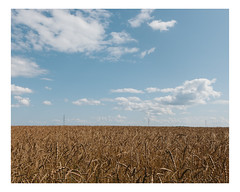 mille quatre cents hectares (Mériol Lehmann) Tags: farming agriculture organic field fields wheat cereals
