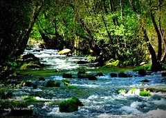 Rio Varosa - Ucanha (verridário) Tags: rio river water riacho floresta forest tree água stones pedras nature naturaleza natureza frescura green vert verde pedra sony