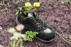 Gardening Shoes (vmonk65) Tags: helgoland insel nikon nikond810 nordsee island northsea