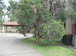 3/23 Blackett Close, East Maitland NSW