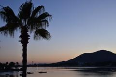 Prot d'Alcudia (tanjaettl) Tags: portdalcudia mallorca spanien palme meer sonnenuntergang schatten travel
