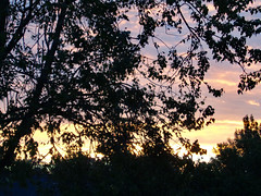 Branches And Morning Sky. (dccradio) Tags: lumberton nc northcarolina robesoncounty outdoor outdoors outside sunrise risingsun sky colorful colorfulsky tree trees treebranch treebranches branch branches foliage treelimb treelimbs october autumn fall morning saturday saturdaymorning goodmorning leaf leaves sony cybershot dscw830 beauty beautiful godshandiwork godscreation pretty nature natural