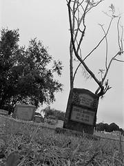 Sprouting (Twila1313) Tags: tombstone cemetery grave headstone branches sprouting limbs plant bush sonymavicafd87 monochrome blackandwhite blackwhite bw